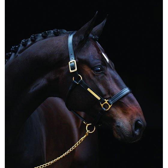 Horseware Amigo topattu riimu