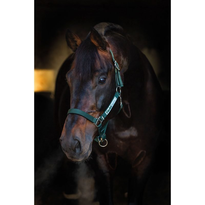 Horseware Field turvariimu