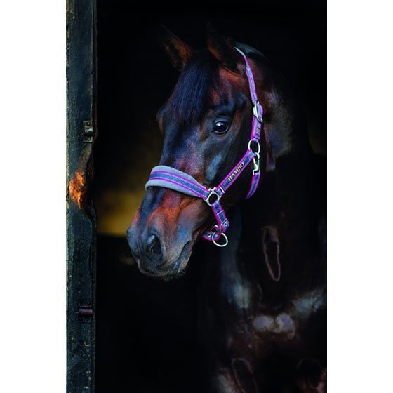 Horseware Rambo topattu riimu